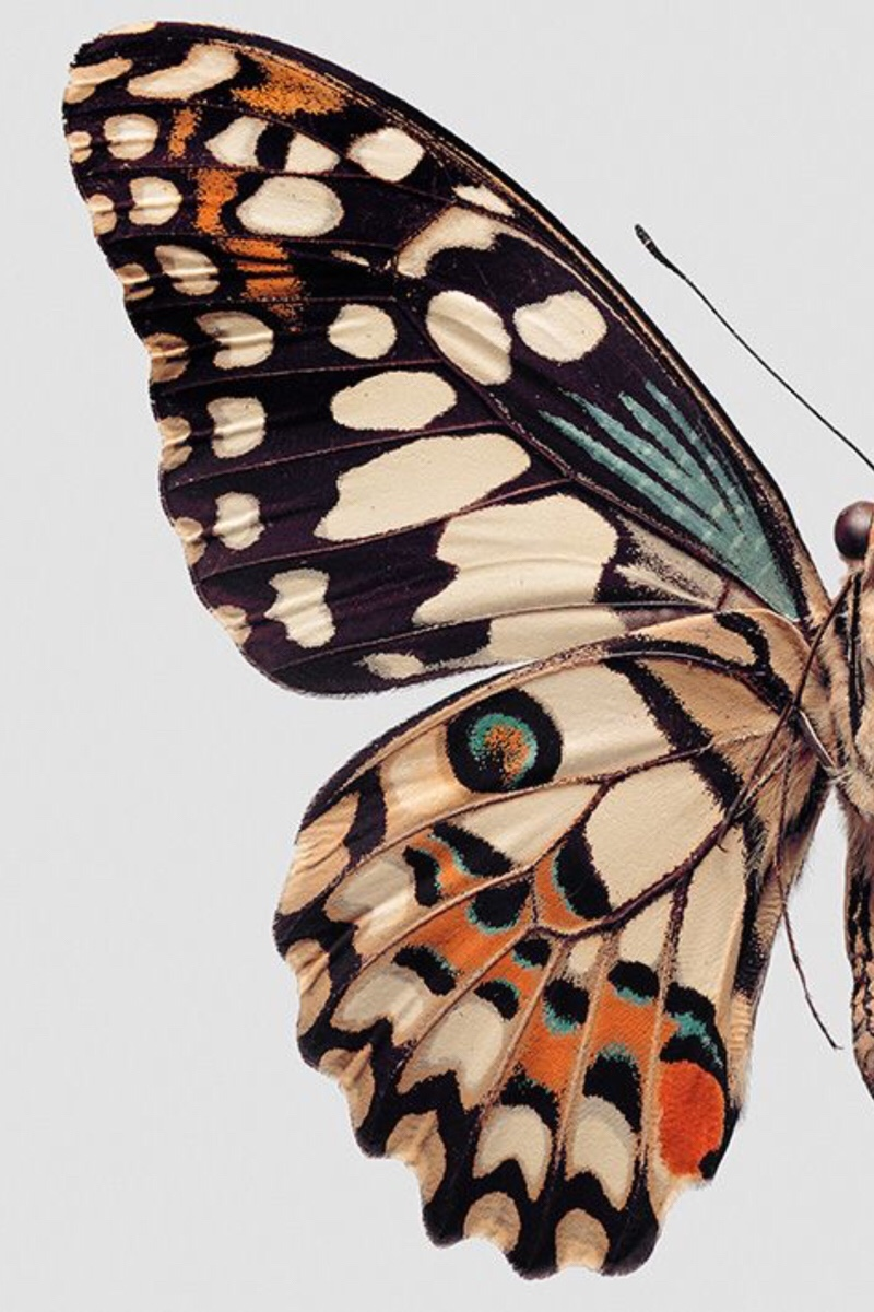 Saiba o que é o Efeito Borboleta e como controlar a Teoria do Caos - blog de psicologia - Melkberg - teoria - caos - efeito borboleta - passado - vida - teoria do caos