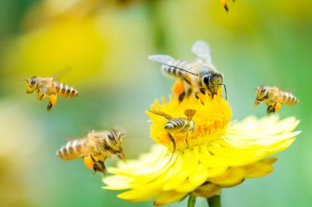 Morte das Abelhas, Filosofia e Psicologia Ambiental - blog de psicologia Melkberg - abelhas - ambiente - filosofia ambiental - morte - polinização - psicologia ambiental - vida